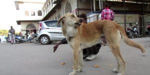 tumor-dog-2
