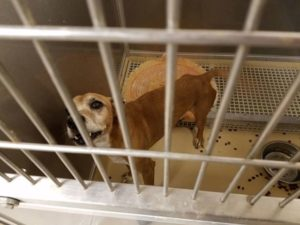 valenica-county-homeless-pets-2