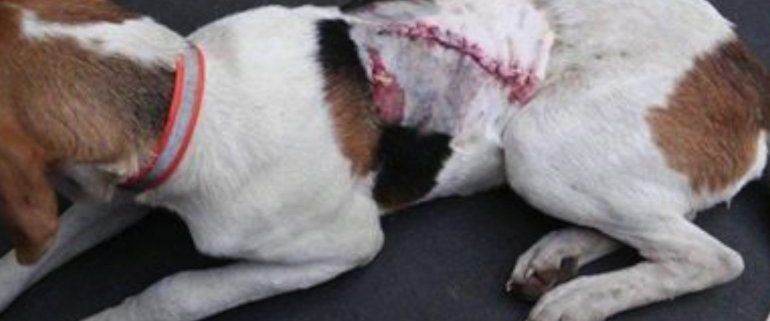 Man accused of attacking dog with machete