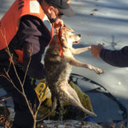 Dog rescued after wandering onto icy pond