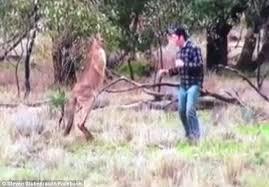 man-fights-kangaroo-2
