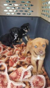 puppies-at-carwash-5