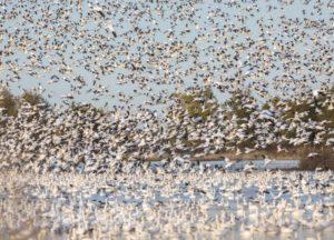 Sacramento National Wildlife Reserve