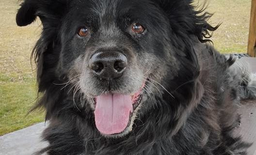 Senior dog homeless for over 5 years