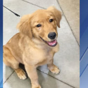 Puppy beaten with metal rod has been adopted