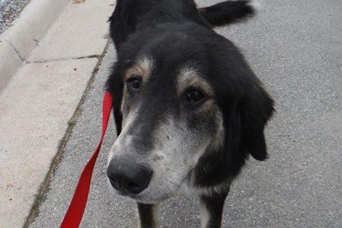 Senior dog refused to leave his deceased friend