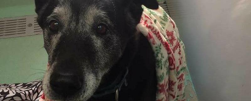 Senior dog, homeless since 2005