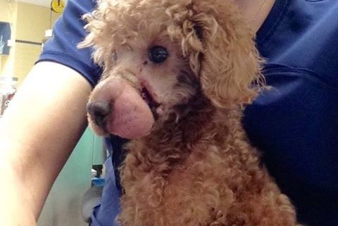 Dog found with mouth bound in elastic