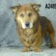 Homeless senior dog in California