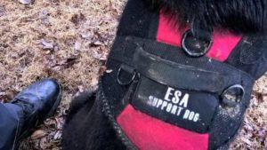 Emotional support dog found