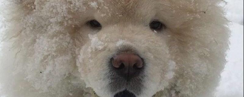 Bieber's former puppy, Todd