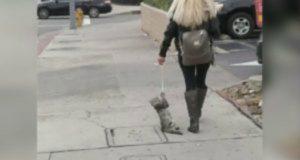 Dragging cat