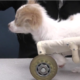 Students are designing custom wheels for disabled puppy