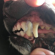 Dog's mouth glued shut after eating a brochure