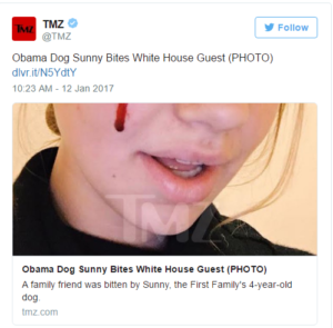 Obama's dog accused of bite to teen's face