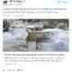Frozen fox extracted from Danube