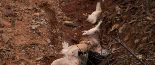 Dead animals found under bridge