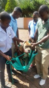 Soweto Animal Rescue