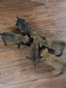 underdog-project-puppies-3