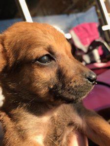underdog-puppy-2