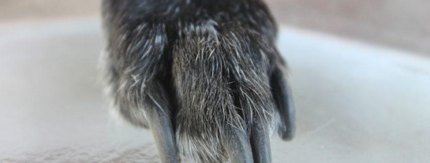 Elderly dog euthanized before stray hold was up