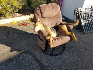 dog-left-on-chair-dead-2