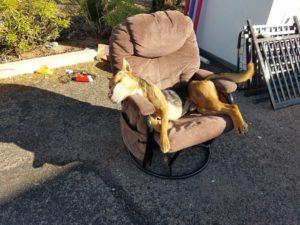 dog-left-on-chair-dead-2