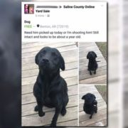 Dog safe after someone threatened to shoot him