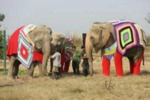 elephant sweaters 2