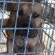 Deputies bust dog-fighting operation
