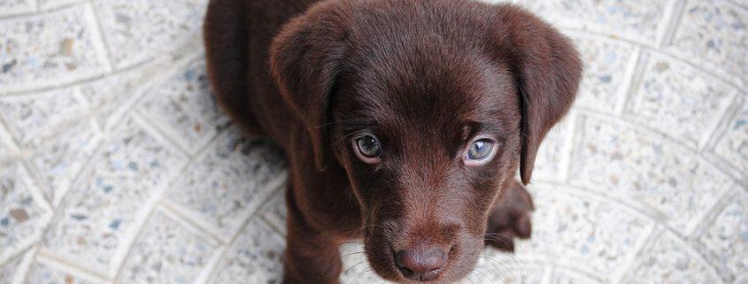 46 puppies died in a fire