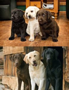 three-dogs-animal-friend-then-and-now-850x1097