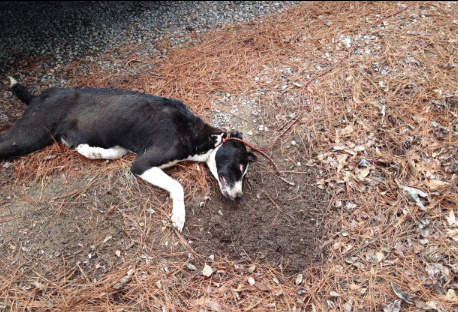 Strangled dog found on side of road