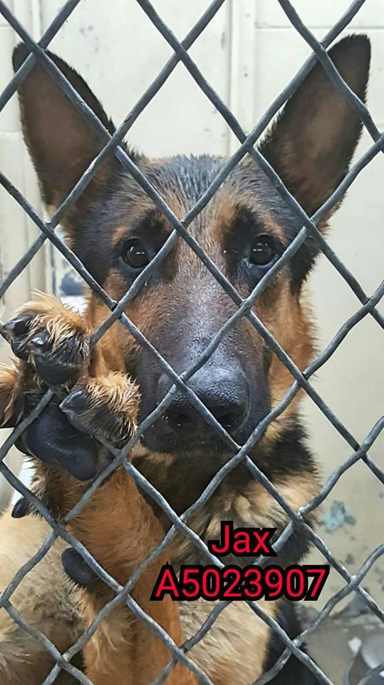 Dog Adoption Los Angeles Area