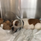 Puppy found with metal rod through skull