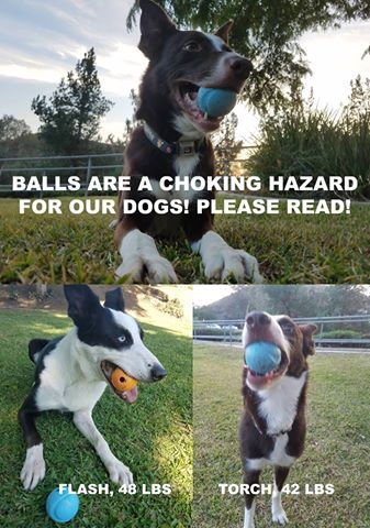 Play ball with your dog? You must read this terrifying story • Pet