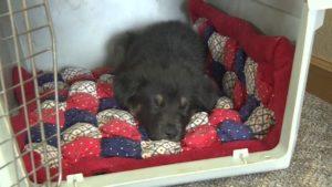 Furry Friends Rockin' Rescue.jpg 2