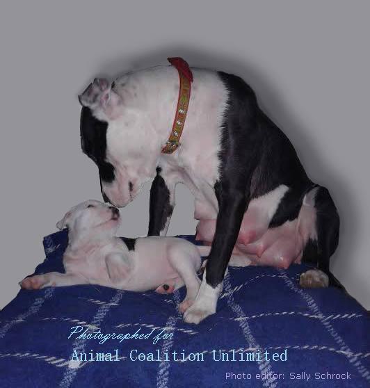 Small Dog Rescue Northern California