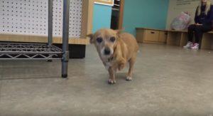 Princess 3 legged dog 4