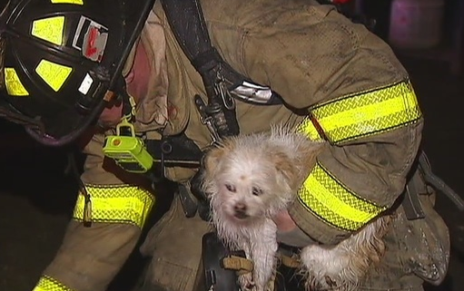 13 dogs died in deadly house fire