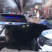 Bull died after escaping from slaughterhouse
