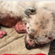 Dog with extensive burns has died
