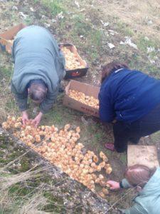 Tiny chicks dumped 2