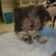 Trio pleads no contest for neglect of small dog