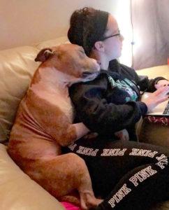pit-bull-adoption