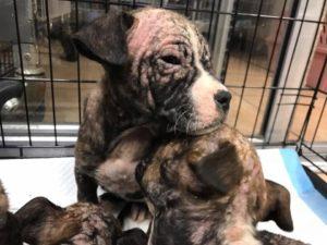 puppies left in box 4