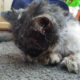 Tragic end for cat who was tortured