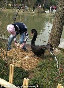 Black swan cries 2