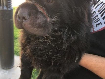 Dog found with rubber band around snout