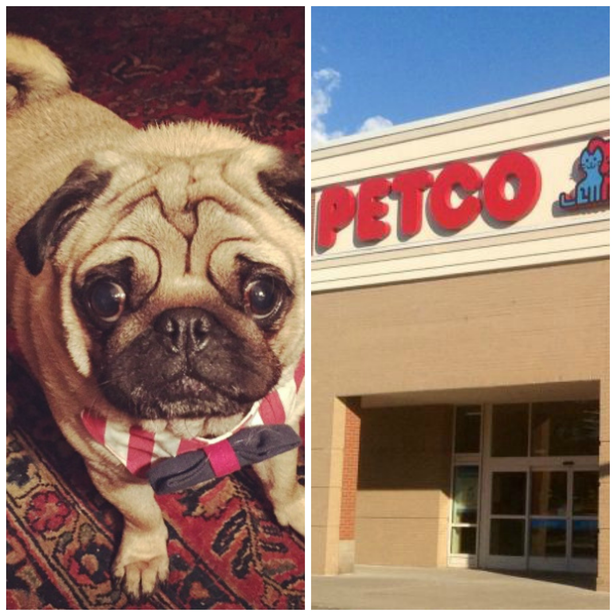 Dog died during Petco grooming session • Pet Rescue Report